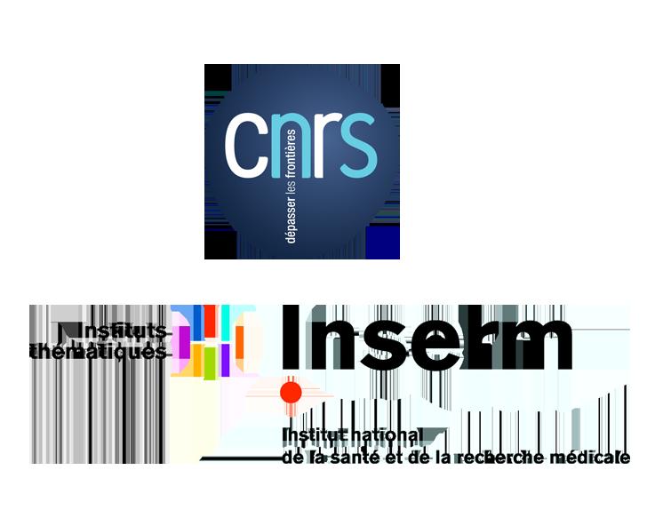 CNRS / INSERM